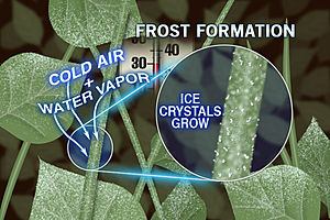 300x200_09111649_frost-formation.jpg