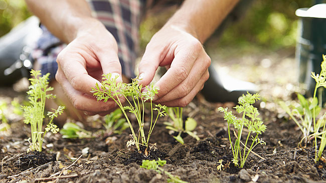 Gardening, Spring
