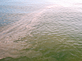 Position of ocean current plays role in harmful Florida red tide algae blooms, study finds