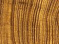Ancient shipwrecks, tree rings provide clues into Caribbean's hurricane history