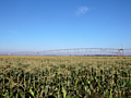 Farmers on edge as northeastern US drought puts crops in jeopardy