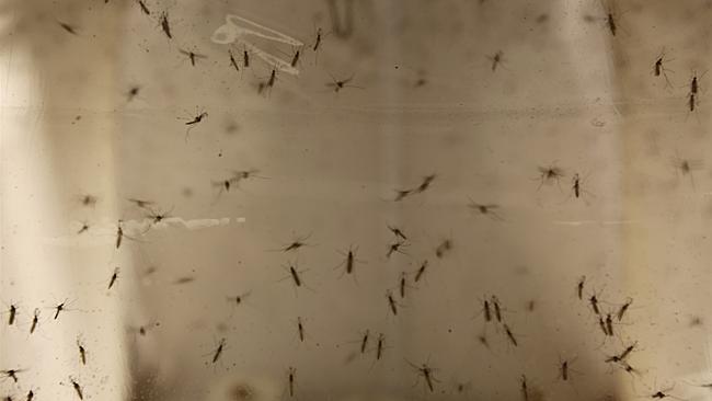 dengue peligroso