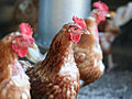 New Bird Flu: What the First 82 Cases Reveal