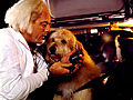 10 Best Dog Movies of All Time