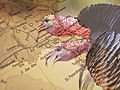 Ultimate Southern Turkey Hunting Road Trips