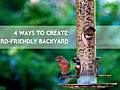 How to Create a Bird-Friendly Backyard