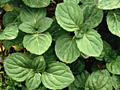 Don't Let These Plants Hijack Your Yard