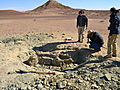Fossils of largest marine croc found.. on Tatooine near the Sahara