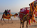 The best beaches in India