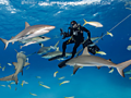 The most thrilling places to swim with sharks